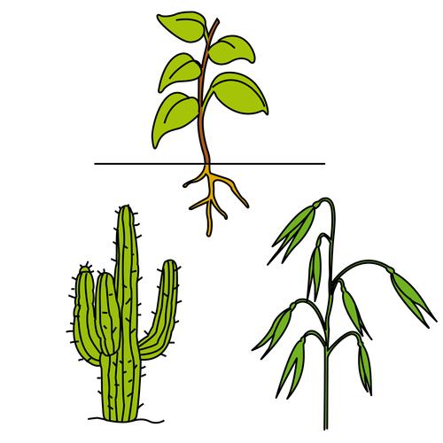 Topic: plants
