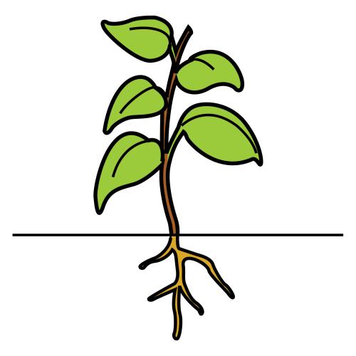plant (a plant)